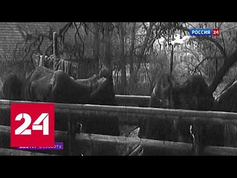Россия и раньше справлялась с эпидемиями при помощи самоизоляции - Россия 24