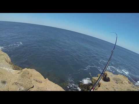 Australian Salmon - Cape Paterson, Victoria - 15/01/2014