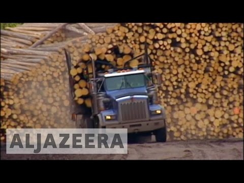 US slaps new tariffs on Canadian lumber