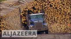 US slaps new tariffs on Canadian lumber