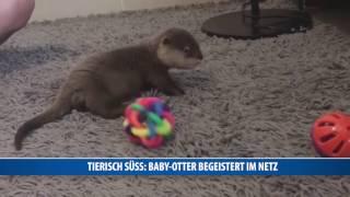 Tierisch süß: Baby-Otter begeistert im Netz