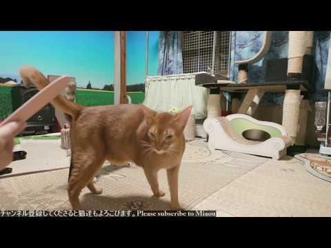 2018.8.14  猫日記   Cats & Kittens room 【Miaou みゃう】