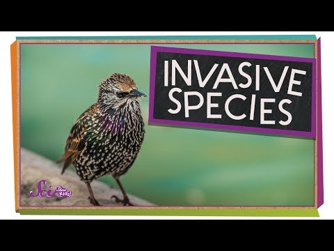 Invading Birds!