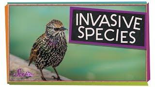 Invading Birds
