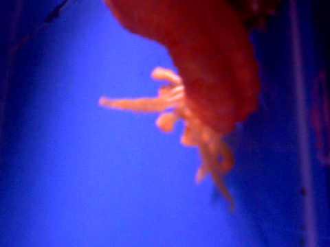 Orange Medusa Worm At The Hidden Reef