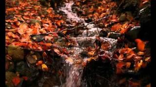 Раймонд Паулс - Листья желтые