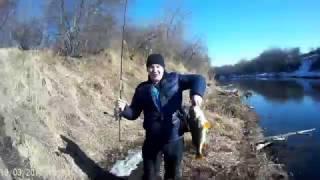 Самый крупный окунь, рыбалка в Красноярске ловля окуня