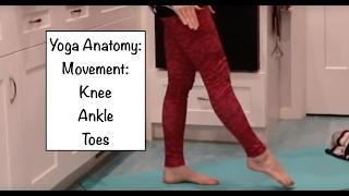 """Yoga ANATOMY Basics 10"": Knee, Ankle, Toes - LauraGYoga"