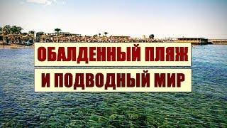 ЕГИПЕТ 2019 Пляж отеля Али Баба и подводный мир. Hurghada Ali Baba Beach and Underwater World