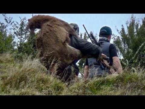 #waikarimoana Hunting Red Deer With 270 Win Rifle In The Roar In New Zealand Part 125