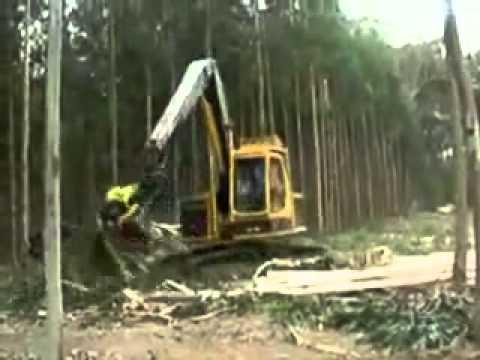 Nội thất Maket - Công nghệ khai thác gỗ