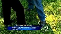 79 marijuana plants found in tent near New Smyrna Beach