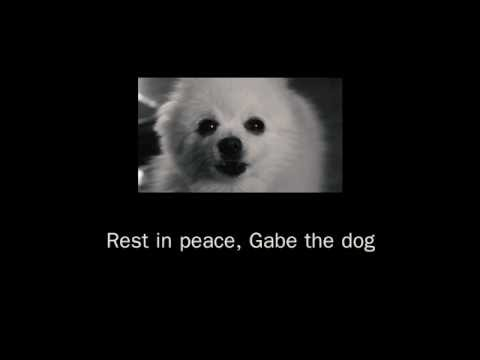 Download TRIBUTE TO GABE THE DOG