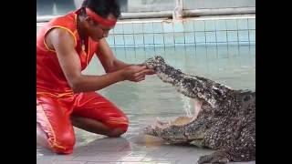 Шоу крокодилов Паттайя