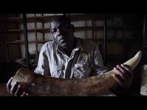 Stop Wildlife Crime. Protect Malawi's Wildlife