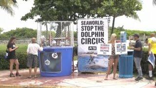 PETA pide la liberación de delfines de parques SeaWorld en Miami Beach