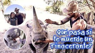 ¿Qué pasa si te muerde un rinoceronte?
