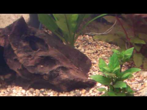 My fish in my  Fluval Venezia 190.