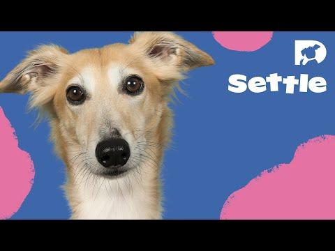 DOGTV : Zebras Relaxation