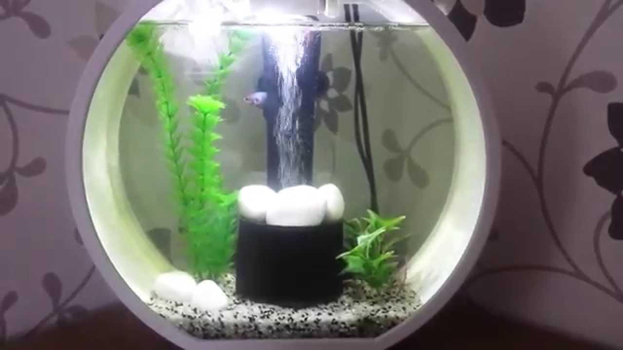 Betta fish in a deco o mini tank youtube for Mini baignoire deco