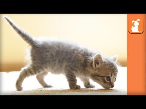 Tiny Kitten Has Tiny Meows - Kitten Love