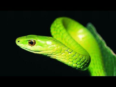 Speed Art 01   modeling tutorial   Green Snake (3D Model)