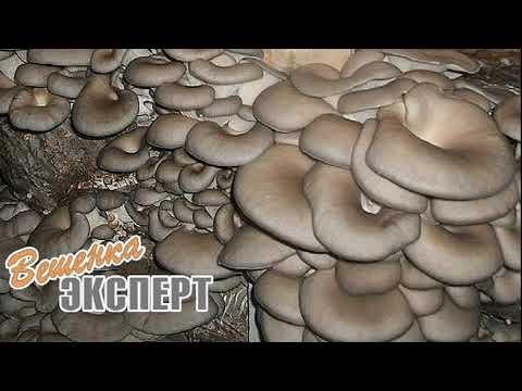 Размещение грибных блоков вешенки. Горизонтальные и вертикальные ряды. Микроперфорация.