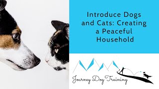 Introduce Dogs and Cats: Creating a Peaceful Household