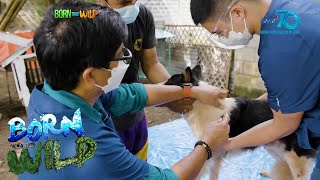 Born to be Wild: Christmas medical mission in Bulacan
