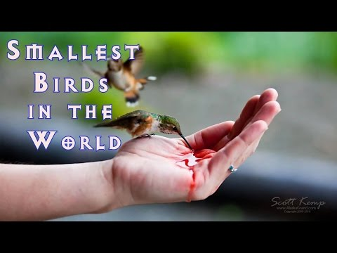 Top 10 Smallest Birds in the World | Dimension and Size