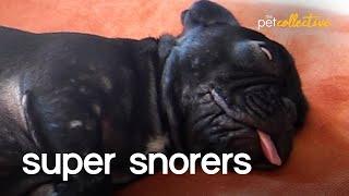 Super Pet Snorers