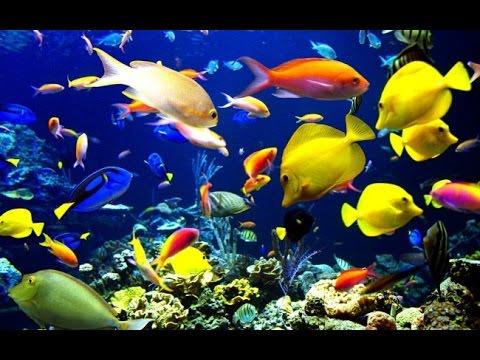 color fish in aquariam