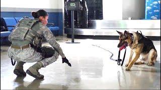 USAF K9 Training by Security Forces @ KADENA AFB