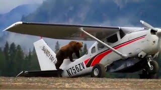 Bear CLIMBS On Plane - Daily dose of aviation
