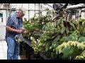 Ep 042 Private Begonia Tour Plant One On Me mp3