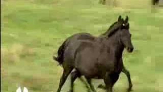 VIDEO OFICIAL YEGUADA VALLE PARTE 1/2