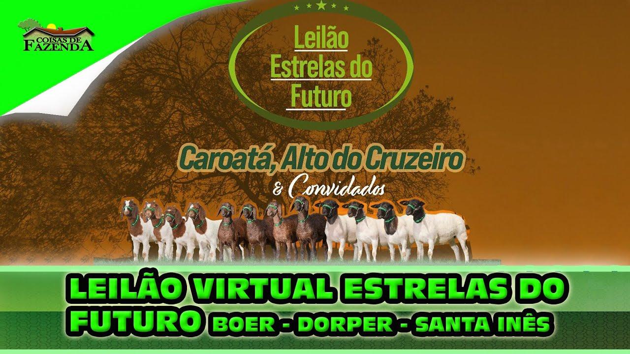 LEILÃO VIRTUAL ESTRELAS DO FUTURO