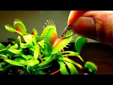 दुनिया के सबसे अजीब पौधे जिनको देखना चाहोगे पर चुना नही Enigmatic Plants In The World
