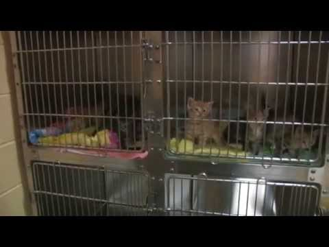 CT Humane Society- Westport Shelter