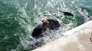 Delfine Varadero 2011  !!!