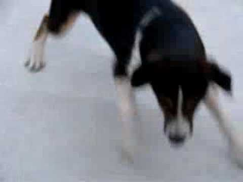 Stupid Dog video and Blower