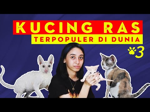 KUCING RAS KATEGORI SHORT HAIR (CORNISH REX & DEVON REX)   TYPES OF CATS