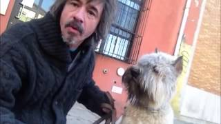 How To Stop Puppy From Nipping And Biting ................peter Caine Dog And Puppy Training