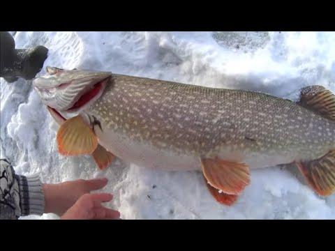 ОГРОМНЫЕ ЩУКИ-2  на жерлицы.рыбалка в Башкирии