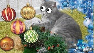 ЕЛКА для КОТА МАКСА. ПЕРВЫЙ РАЗ встречает Новый год 2018 Вечер глазами котёнка