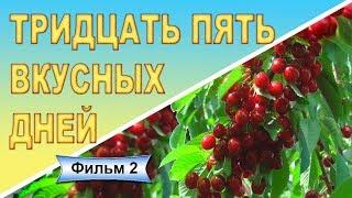 видео Сорта черешни: Ревна и Валерий Чкалов