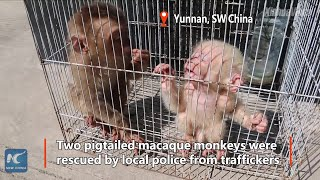 Rare baby monkeys rescued, babysat by local police in SW China How sweet!