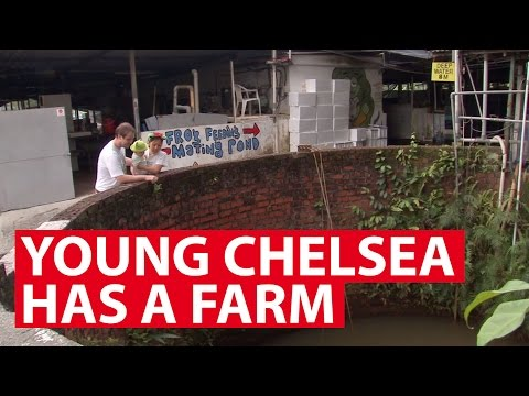 Young Chelsea Has A Farm | On The Red Dot | CNA Insider