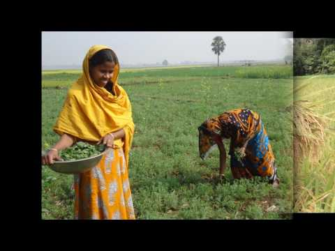 Women in Agriculture of Bangladesh- Radio Today - Kirshi O N