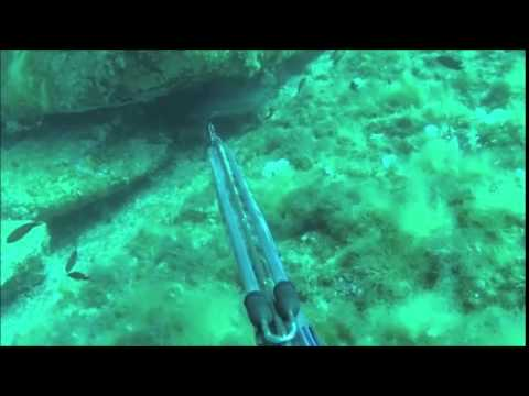 Chasse Sous Marine Corse Spearfishing Mars 2015  YouTube